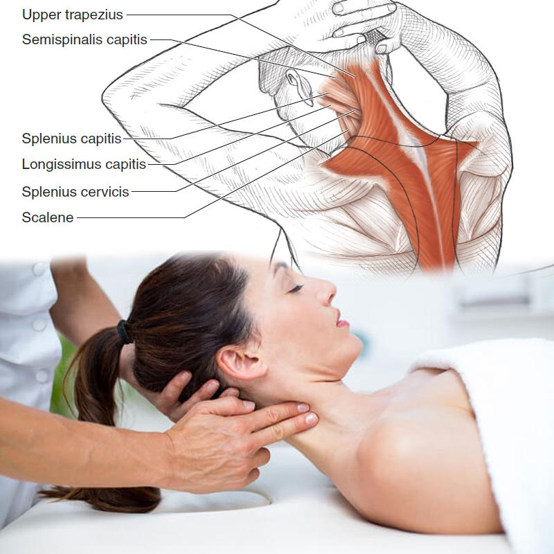 Le massage 4D qui se concentre sur la zone du cou