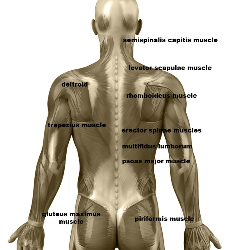 Le massage aux omoplates – Par extension avec des rouleaux